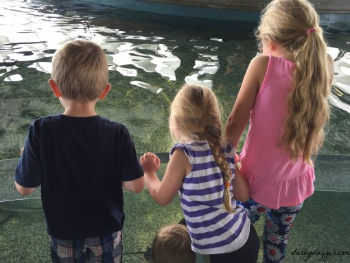 kids at Shark Shallows